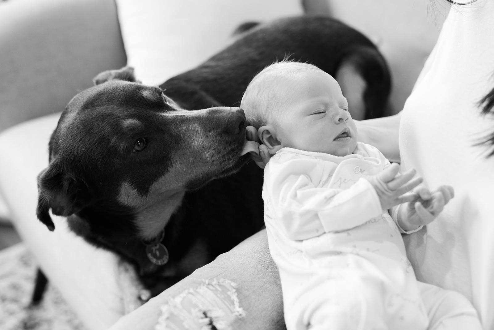 Brisbane newborn photographer by Mario Colli Photography